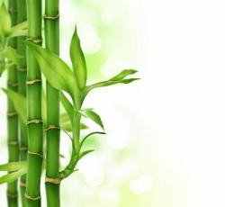 бамбук зеленый
